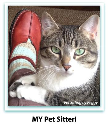 pet sitter in Homewood, Mountain Brook, and Vestavia, Alabama