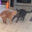 2-cats-playing