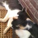 2-cats-sleeping