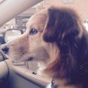 Dog car.jpg