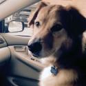 Dog car2.jpg