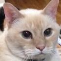 cat-closeup