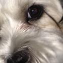 dog-eye