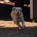 dog-with-ball