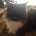 fluffy-cat