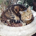 kitty-in-planter