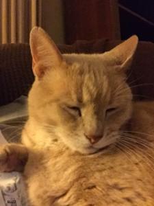 Orange cat, sleeping